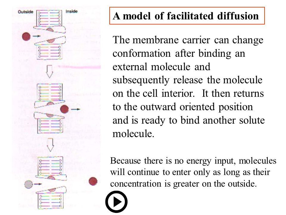 A model of facilitated diffusion