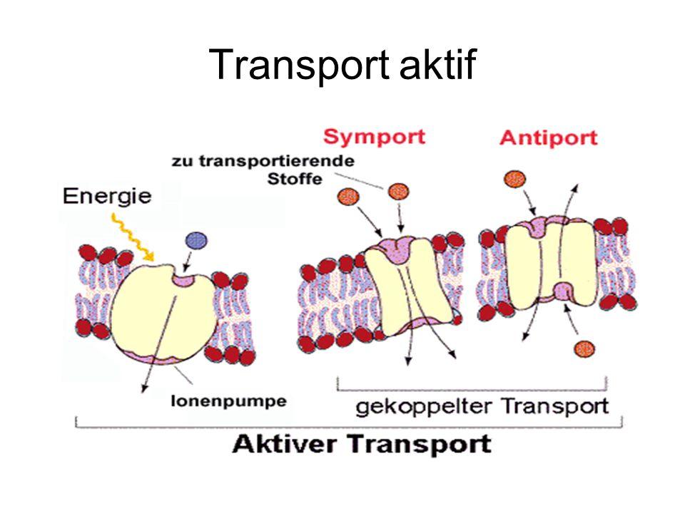 Transport aktif