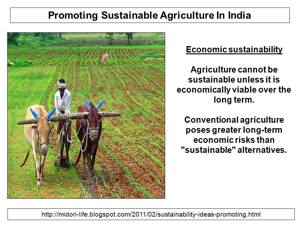 Promoting Sustainable Agriculture In India Economic sustainability