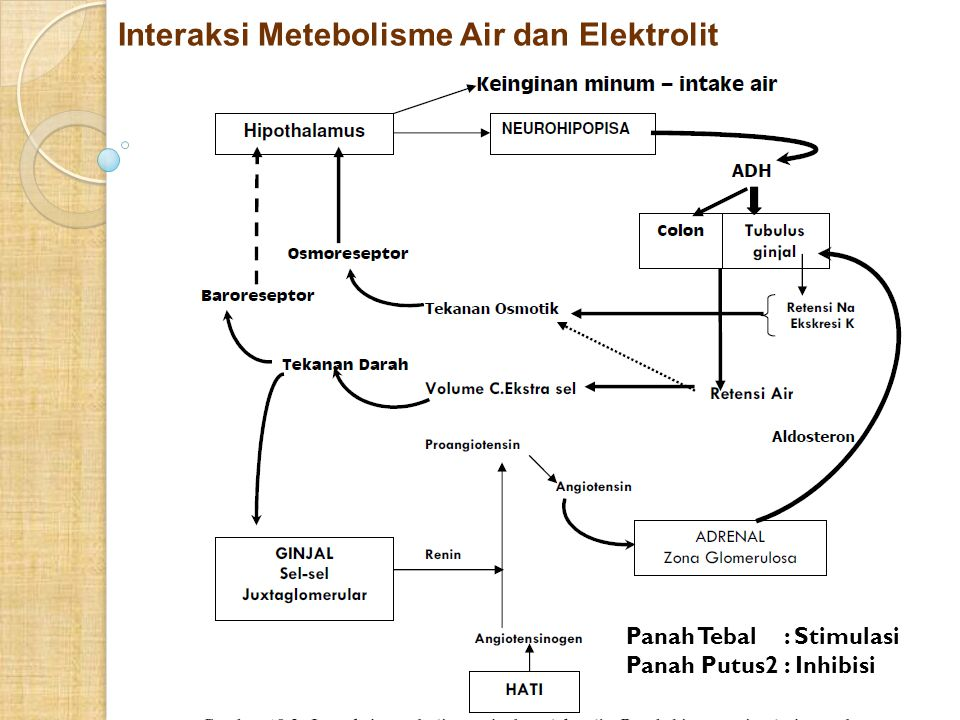 Interaksi Metebolisme Air dan Elektrolit