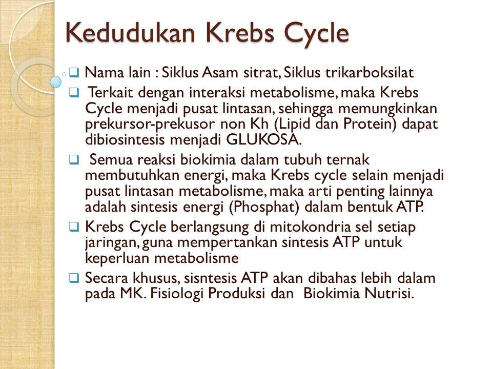 Kedudukan Krebs Cycle Nama lain : Siklus Asam sitrat, Siklus trikarboksilat.