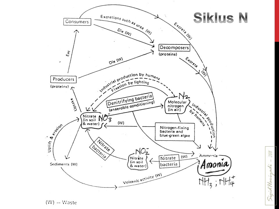 Siklus N SigidHariyadi – 2011