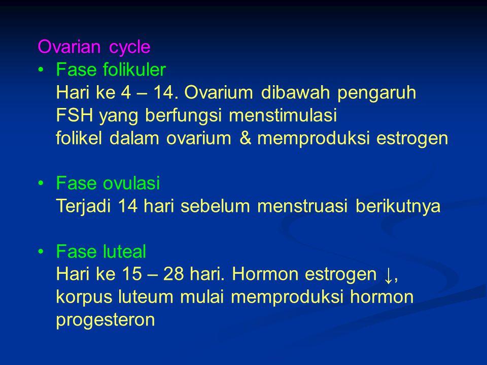Ovarian cycle Fase folikuler. Hari ke 4 – 14. Ovarium dibawah pengaruh FSH yang berfungsi menstimulasi.