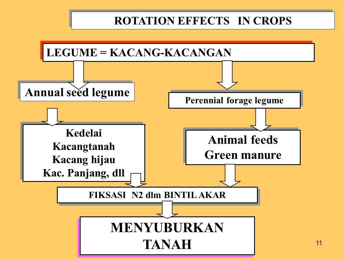 MENYUBURKAN TANAH Animal feeds Green manure Annual seed legume
