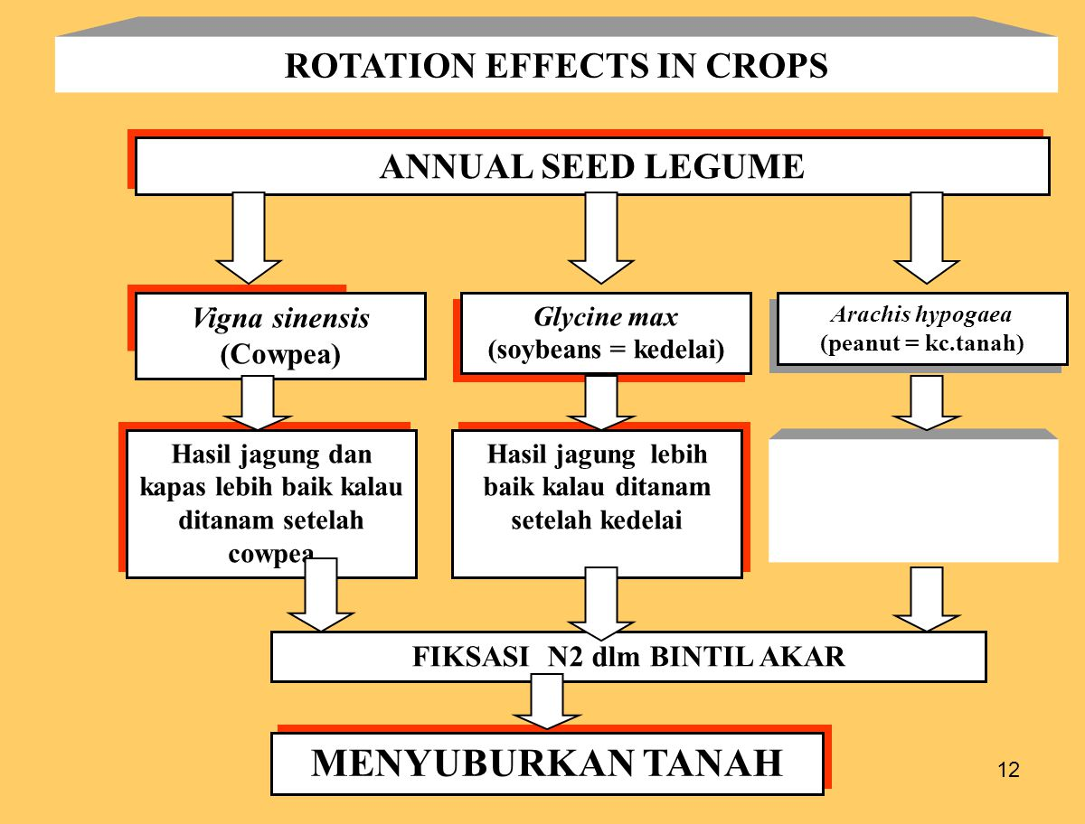 MENYUBURKAN TANAH ROTATION EFFECTS IN CROPS ANNUAL SEED LEGUME