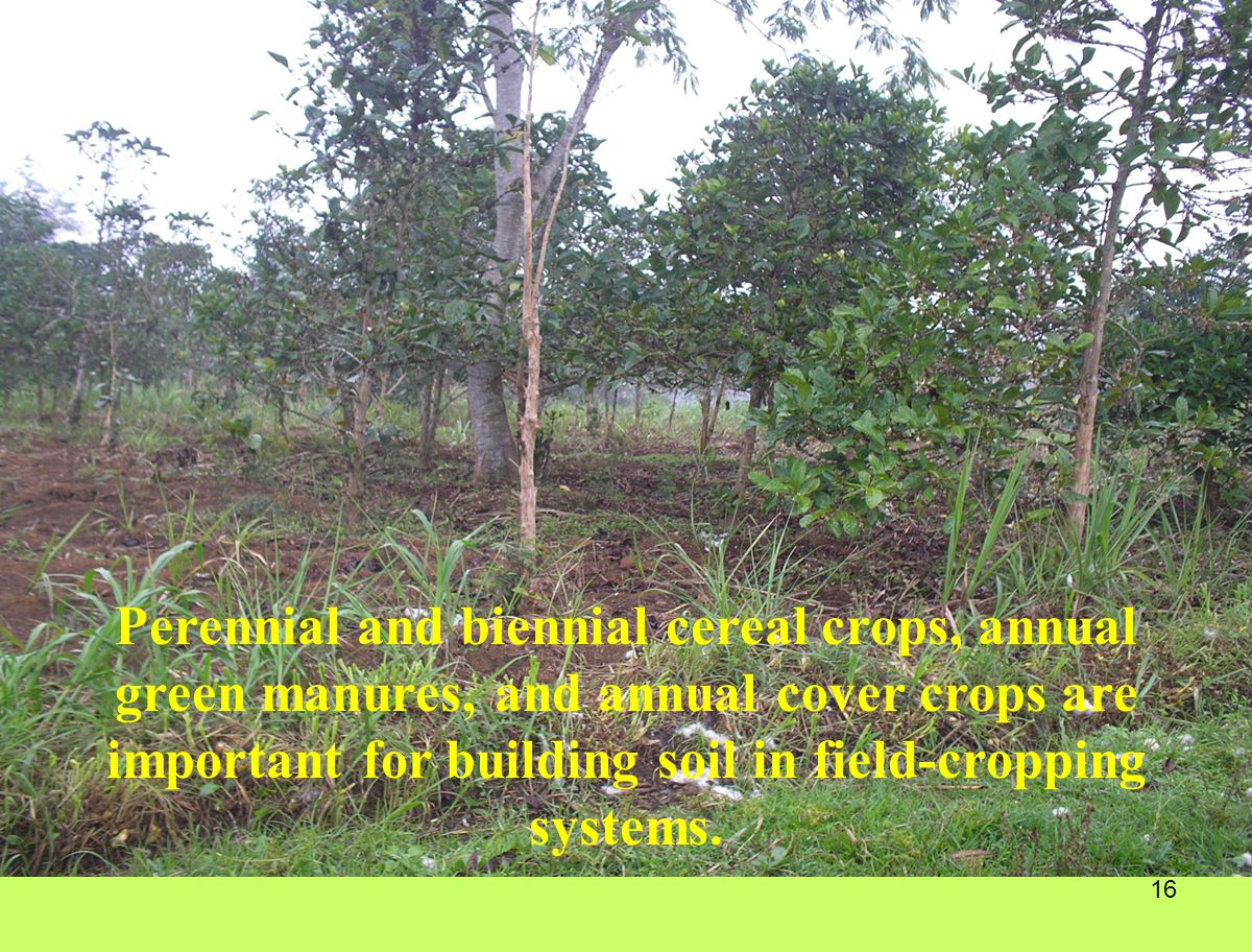 Perennial and biennial cereal crops, annual green manures, and annual cover crops are important for building soil in field-cropping systems.