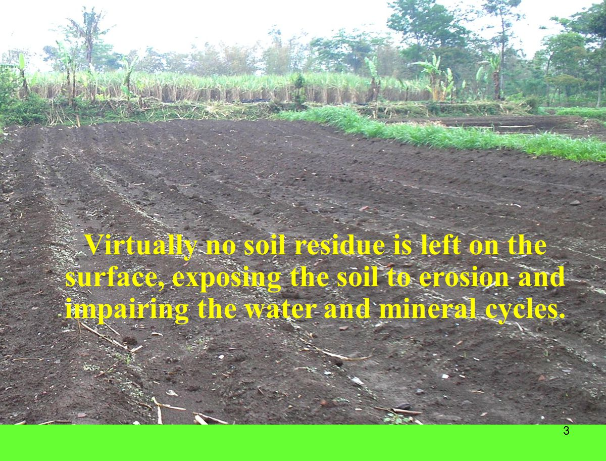 Virtually no soil residue is left on the surface, exposing the soil to erosion and impairing the water and mineral cycles.