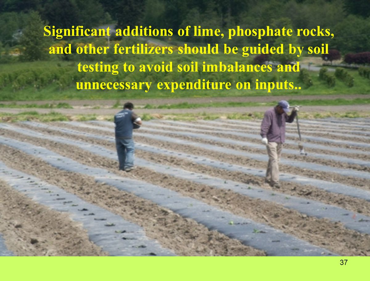 Significant additions of lime, phosphate rocks, and other fertilizers should be guided by soil testing to avoid soil imbalances and unnecessary expenditure on inputs..
