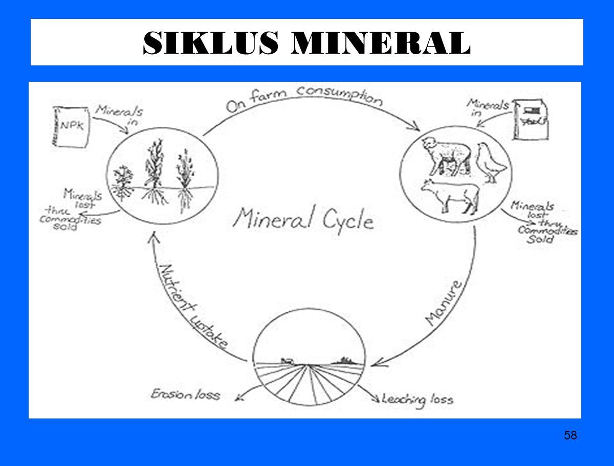 SIKLUS MINERAL