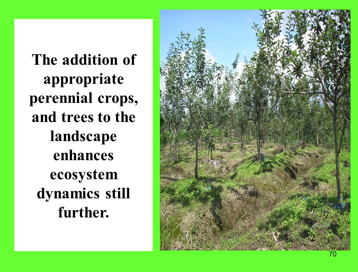 The addition of appropriate perennial crops, and trees to the landscape enhances ecosystem dynamics still further.