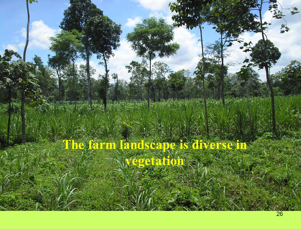 The farm landscape is diverse in vegetation