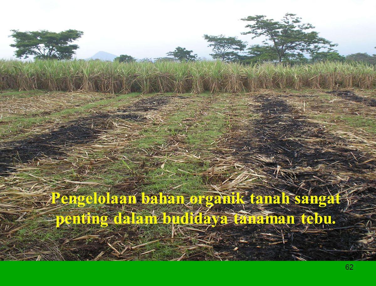 Pengelolaan bahan organik tanah sangat penting dalam budidaya tanaman tebu.