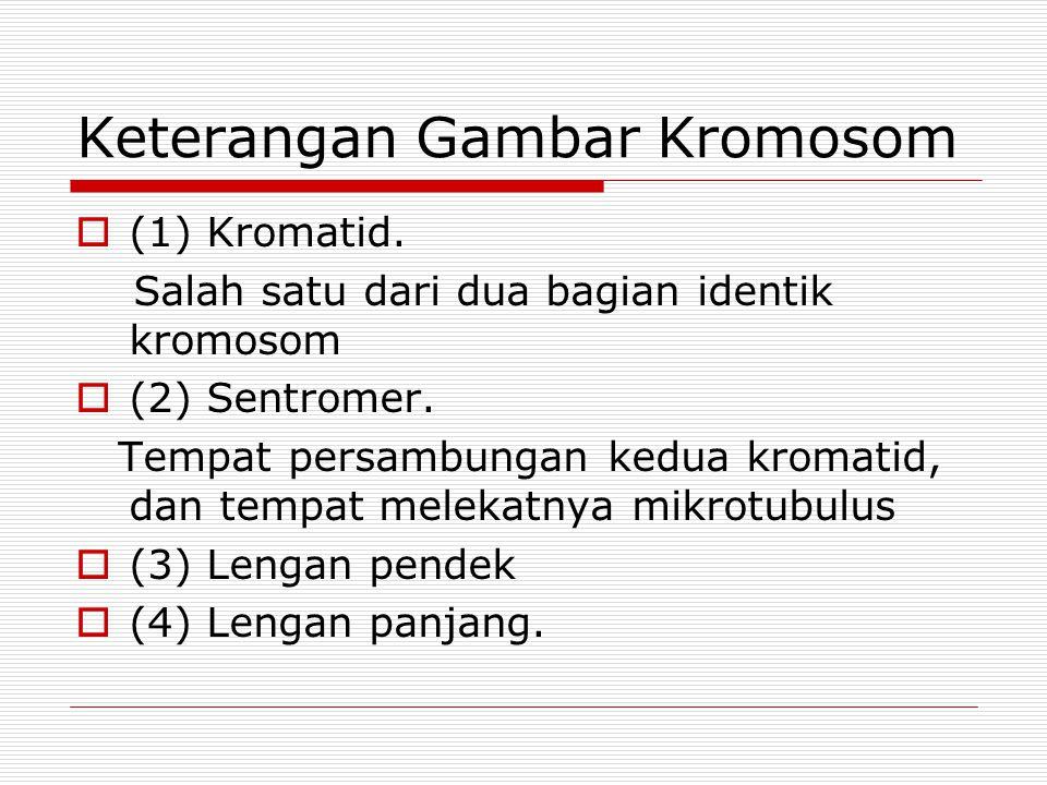 Keterangan Gambar Kromosom