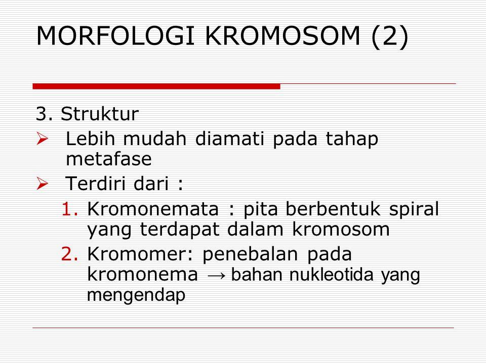 MORFOLOGI KROMOSOM (2) 3. Struktur