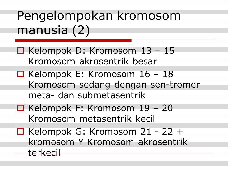 Pengelompokan kromosom manusia (2)