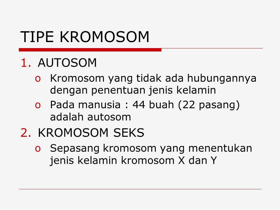 TIPE KROMOSOM AUTOSOM KROMOSOM SEKS