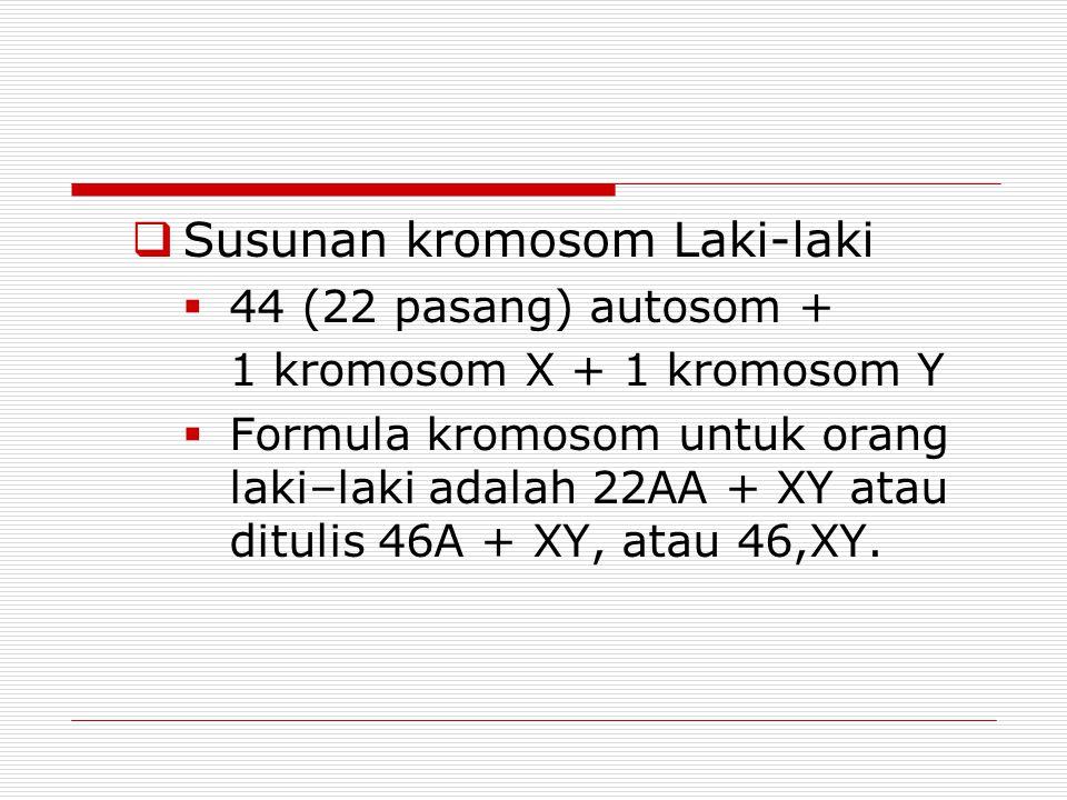 Susunan kromosom Laki-laki