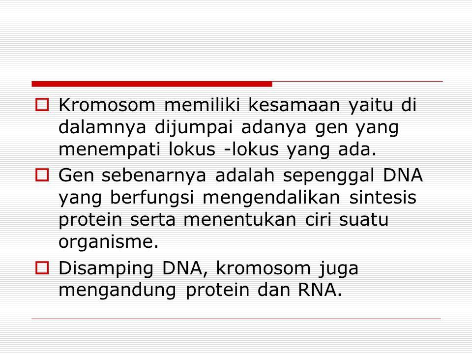 Kromosom memiliki kesamaan yaitu di dalamnya dijumpai adanya gen yang menempati lokus -lokus yang ada.