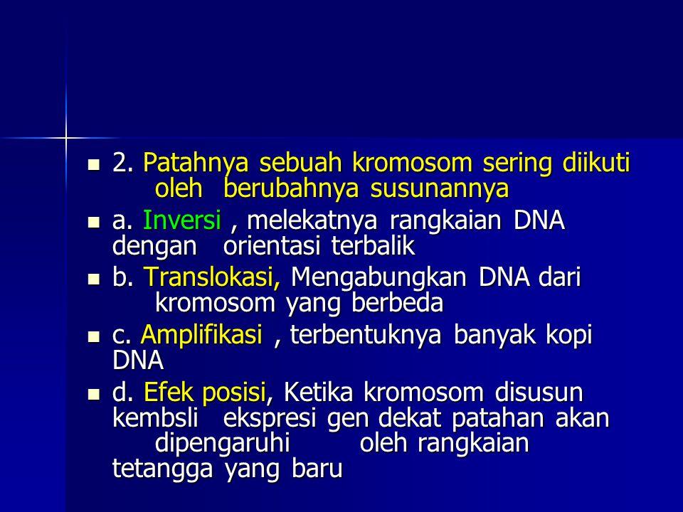 2. Patahnya sebuah kromosom sering diikuti oleh berubahnya susunannya