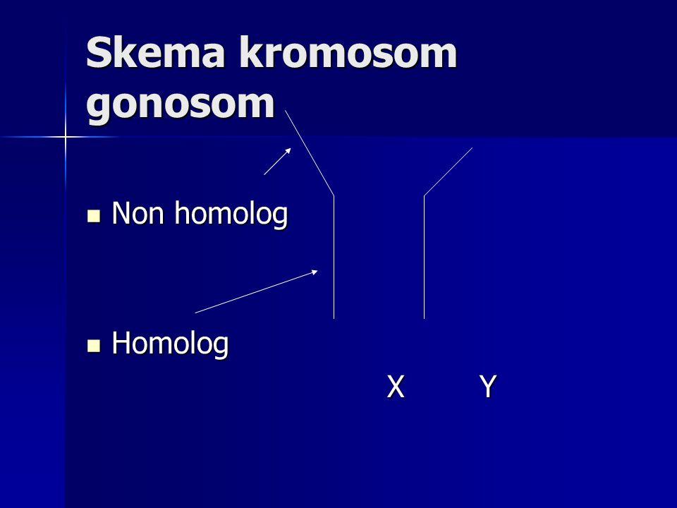Skema kromosom gonosom