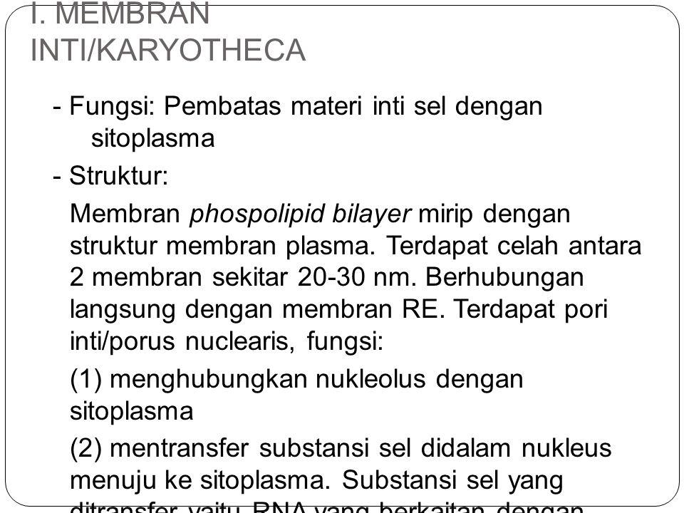 I. MEMBRAN INTI/KARYOTHECA