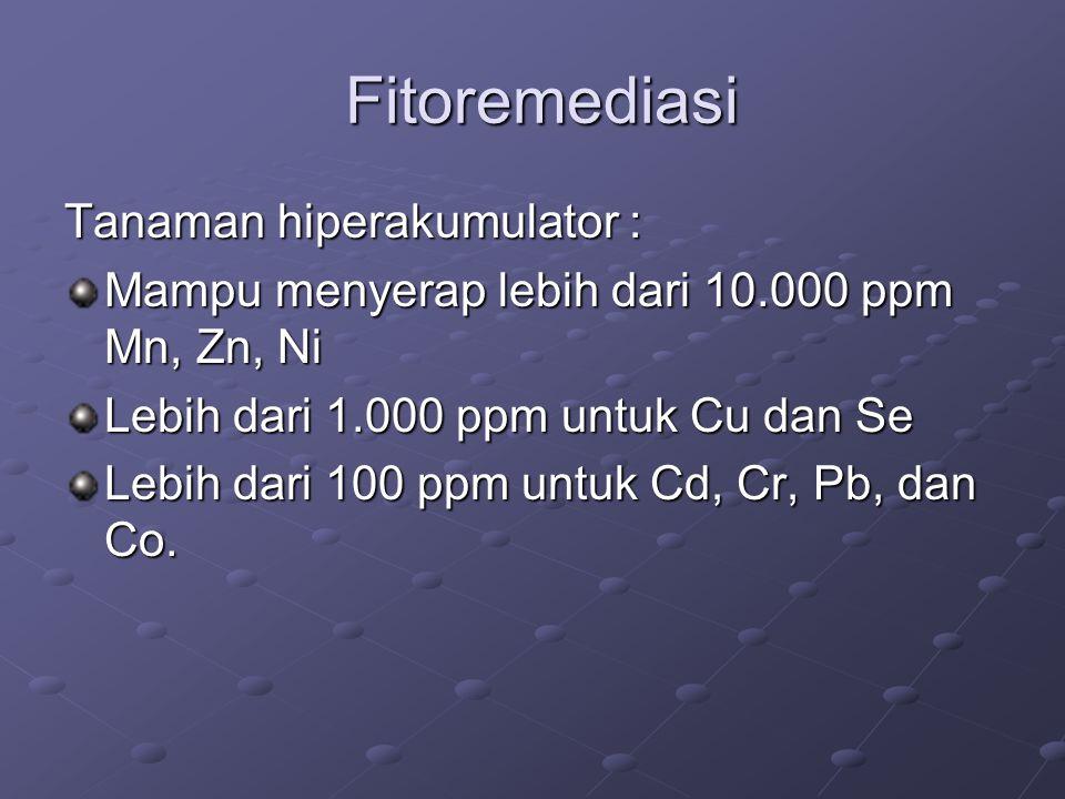 Fitoremediasi Tanaman hiperakumulator :
