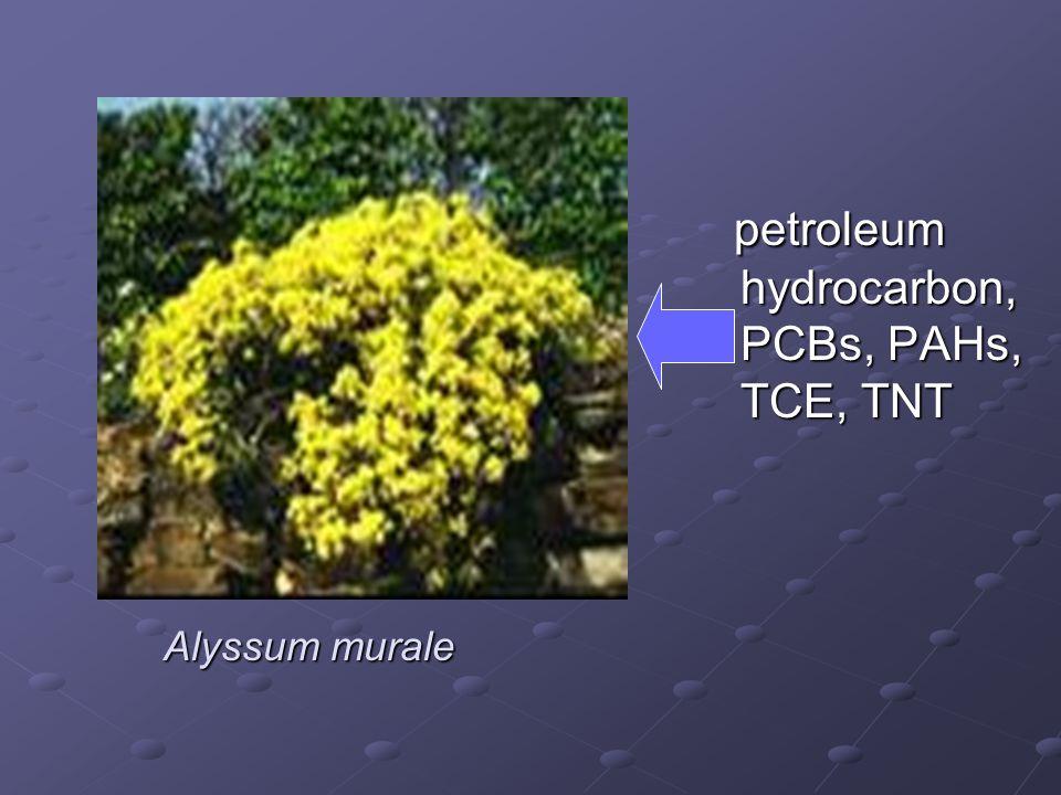 petroleum hydrocarbon, PCBs, PAHs, TCE, TNT