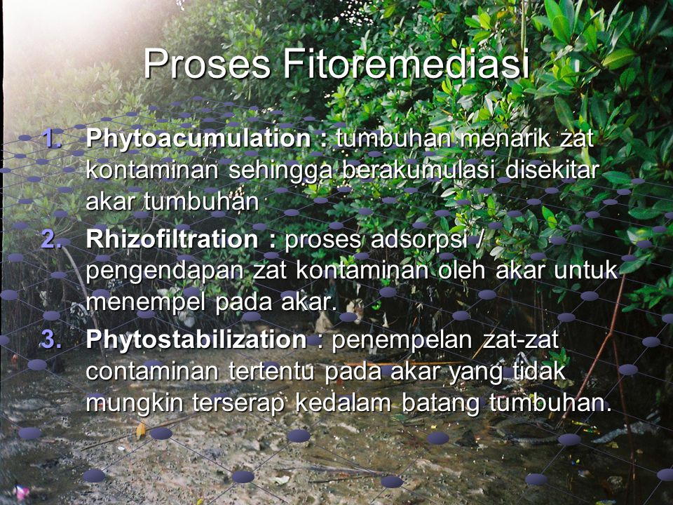 Proses Fitoremediasi Phytoacumulation : tumbuhan menarik zat kontaminan sehingga berakumulasi disekitar akar tumbuhan.
