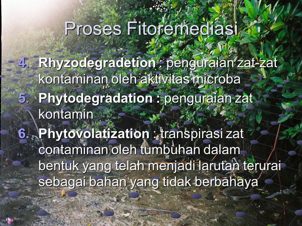 Proses Fitoremediasi Rhyzodegradetion : penguraian zat-zat kontaminan oleh aktivitas microba. Phytodegradation : penguraian zat kontamin.