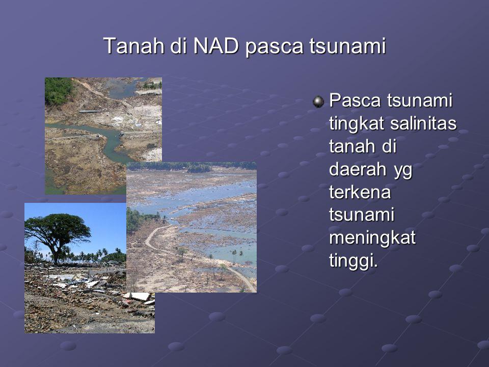 Tanah di NAD pasca tsunami