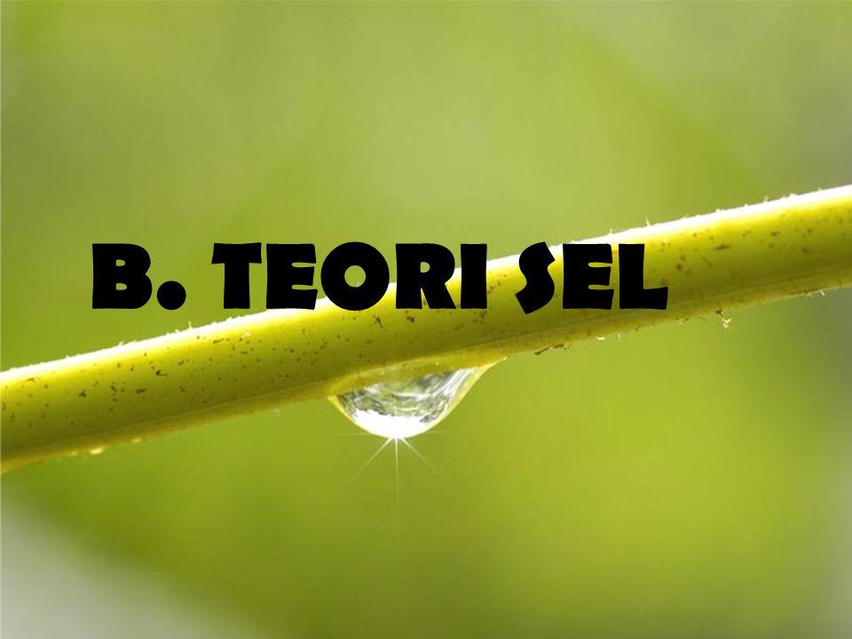 B. TEORI SEL