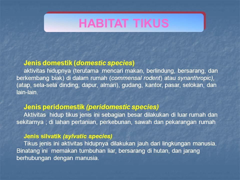 HABITAT TIKUS Jenis domestik (domestic species)