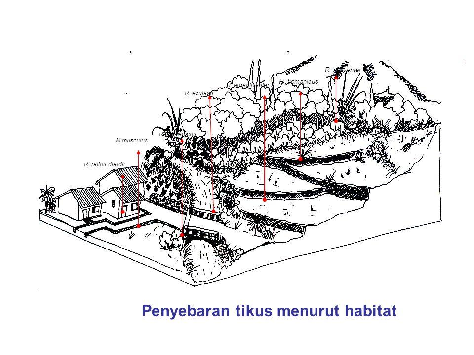 Penyebaran tikus menurut habitat