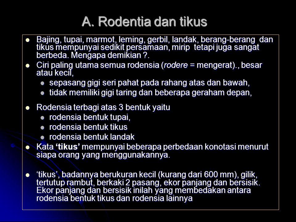A. Rodentia dan tikus