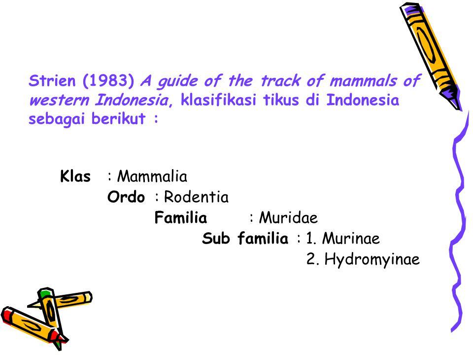 Strien (1983) A guide of the track of mammals of western Indonesia, klasifikasi tikus di Indonesia sebagai berikut :