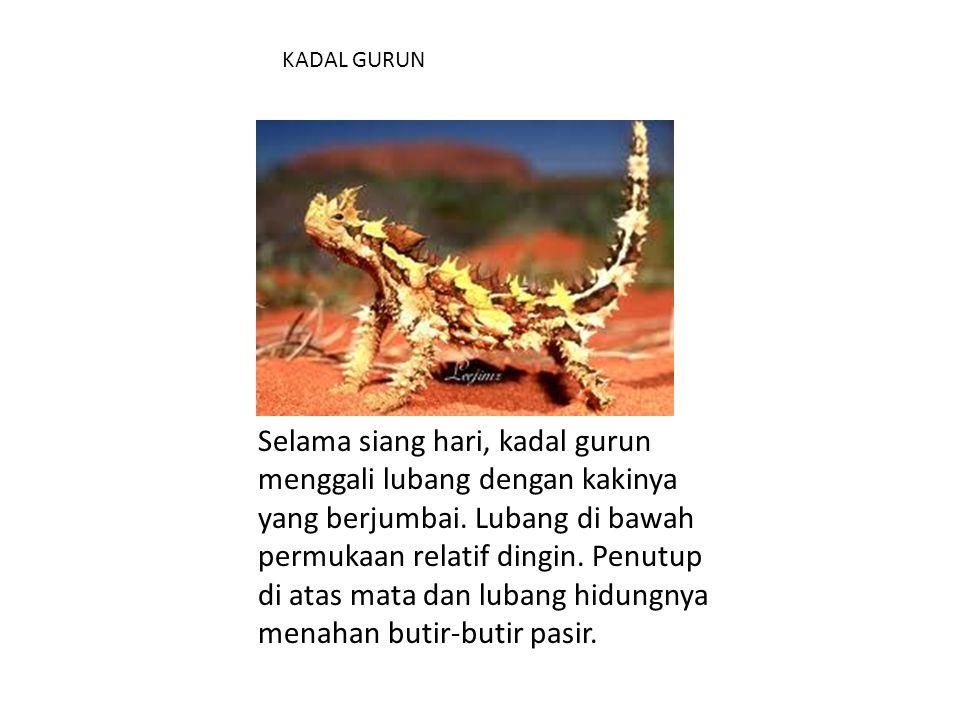 KADAL GURUN