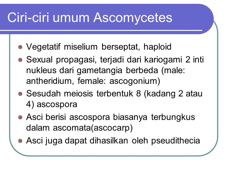 Ciri-ciri umum Ascomycetes