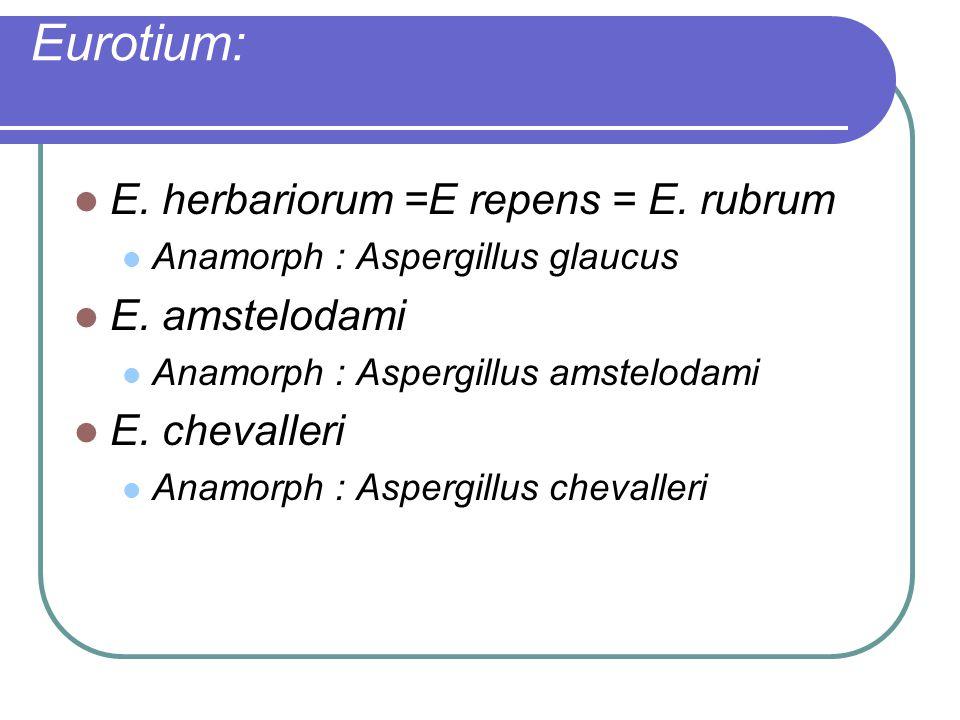 Eurotium: E. herbariorum =E repens = E. rubrum E. amstelodami