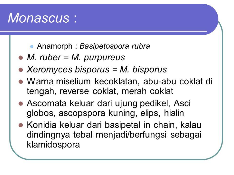 Monascus : M. ruber = M. purpureus Xeromyces bisporus = M. bisporus
