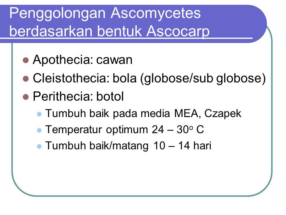 Penggolongan Ascomycetes berdasarkan bentuk Ascocarp
