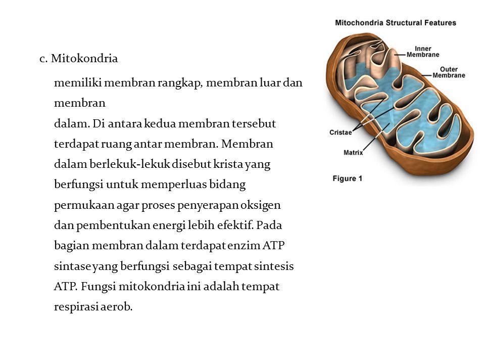c. Mitokondria