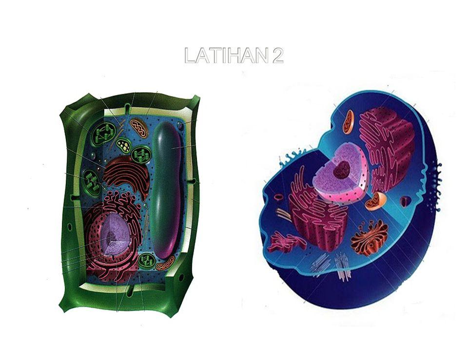 LATIHAN 2 AA