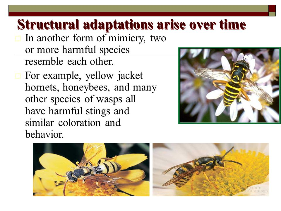 Structural adaptations arise over time