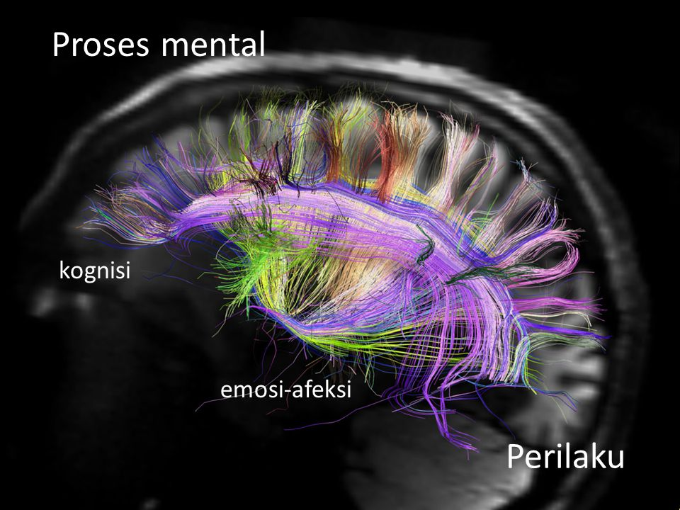 Proses mental kognisi emosi-afeksi Perilaku