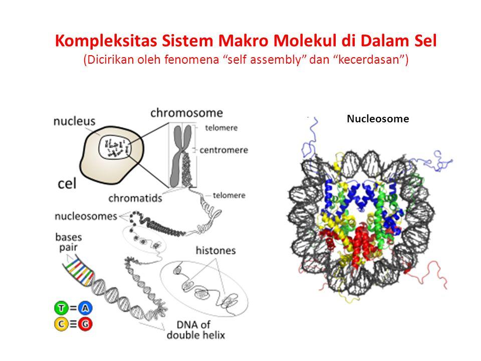 Kompleksitas Sistem Makro Molekul di Dalam Sel