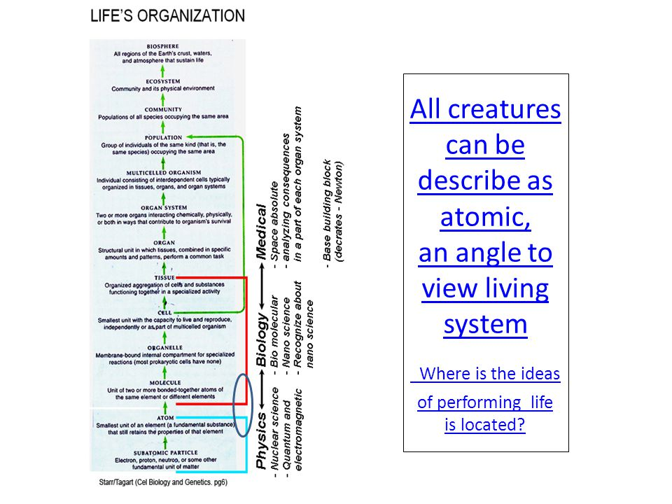 All creatures can be describe as atomic, an angle to view living system Where is the ideas of performing life is located