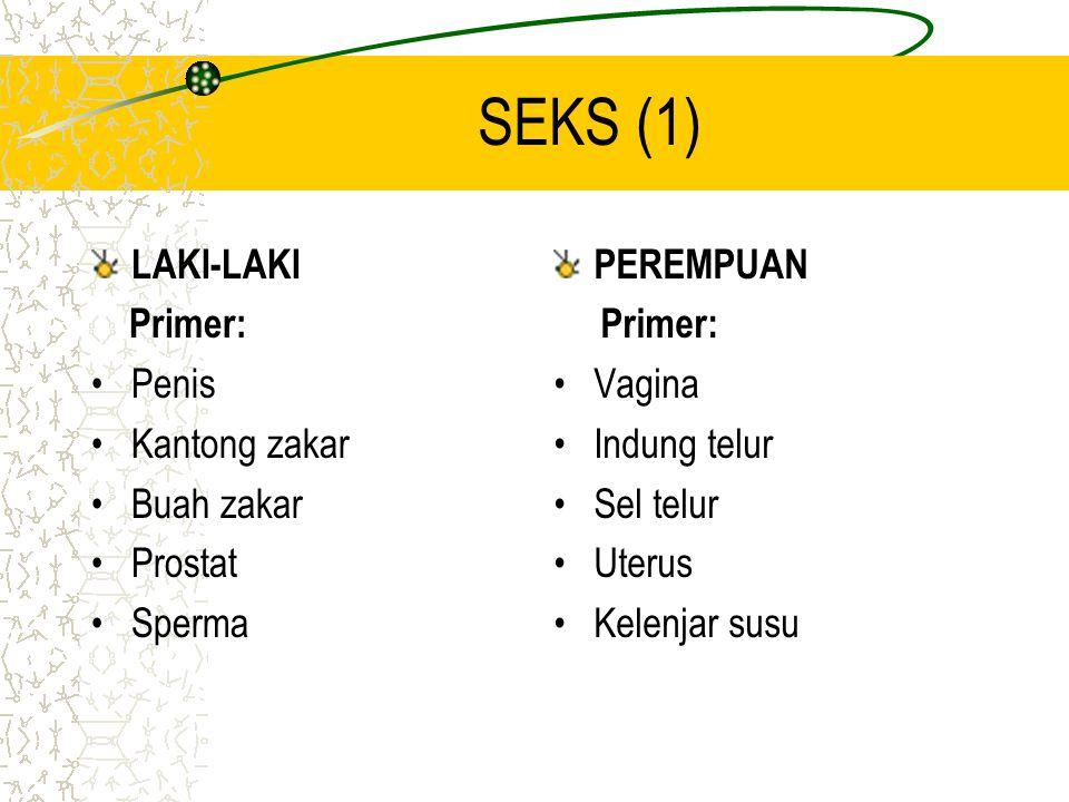 SEKS (1) LAKI-LAKI Primer: Penis Kantong zakar Buah zakar Prostat