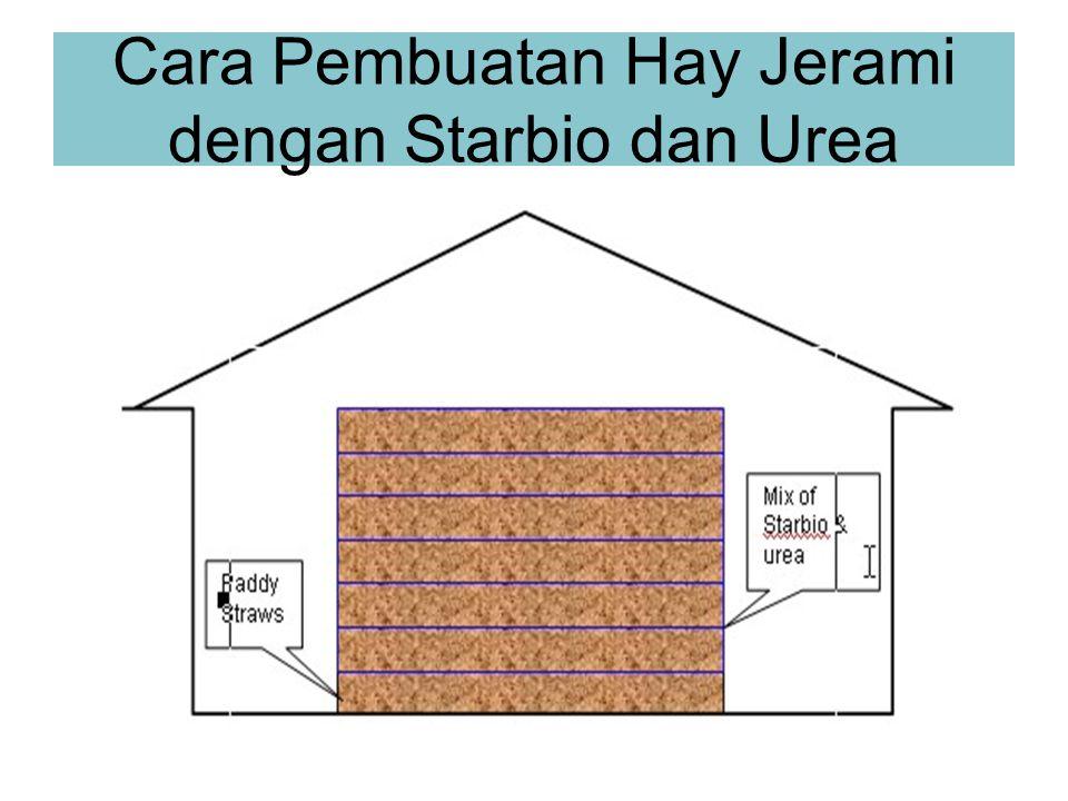 Cara Pembuatan Hay Jerami dengan Starbio dan Urea