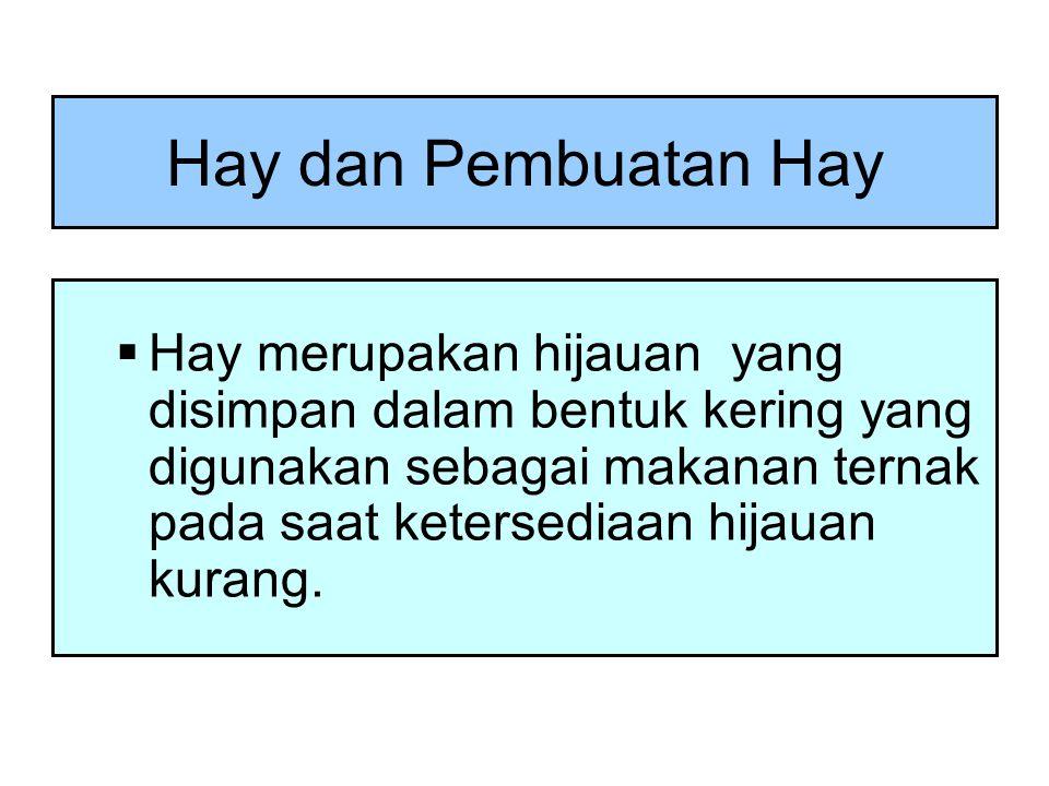 Hay dan Pembuatan Hay