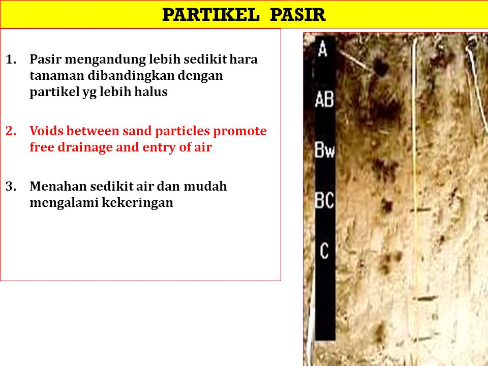 PARTIKEL PASIR Pasir mengandung lebih sedikit hara tanaman dibandingkan dengan partikel yg lebih halus.